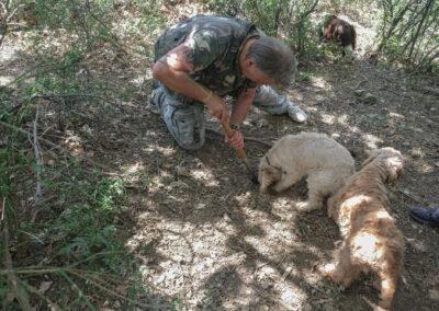 Cani da tartufo impegnati nella ricerca del buonissimo tubero nei boschi di San Mauro Forte