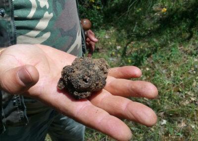 Un bel tartufo nero trovato nei boschi di San Mauro Forte durante il tartufo trekking